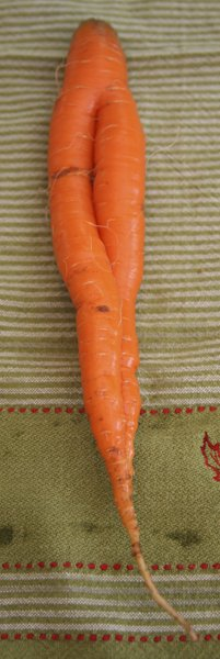 i have to pee carrot