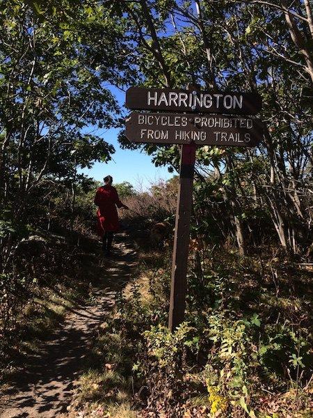 harrington (11)